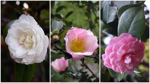 Il giardino azienda floricola for Esperto risponde