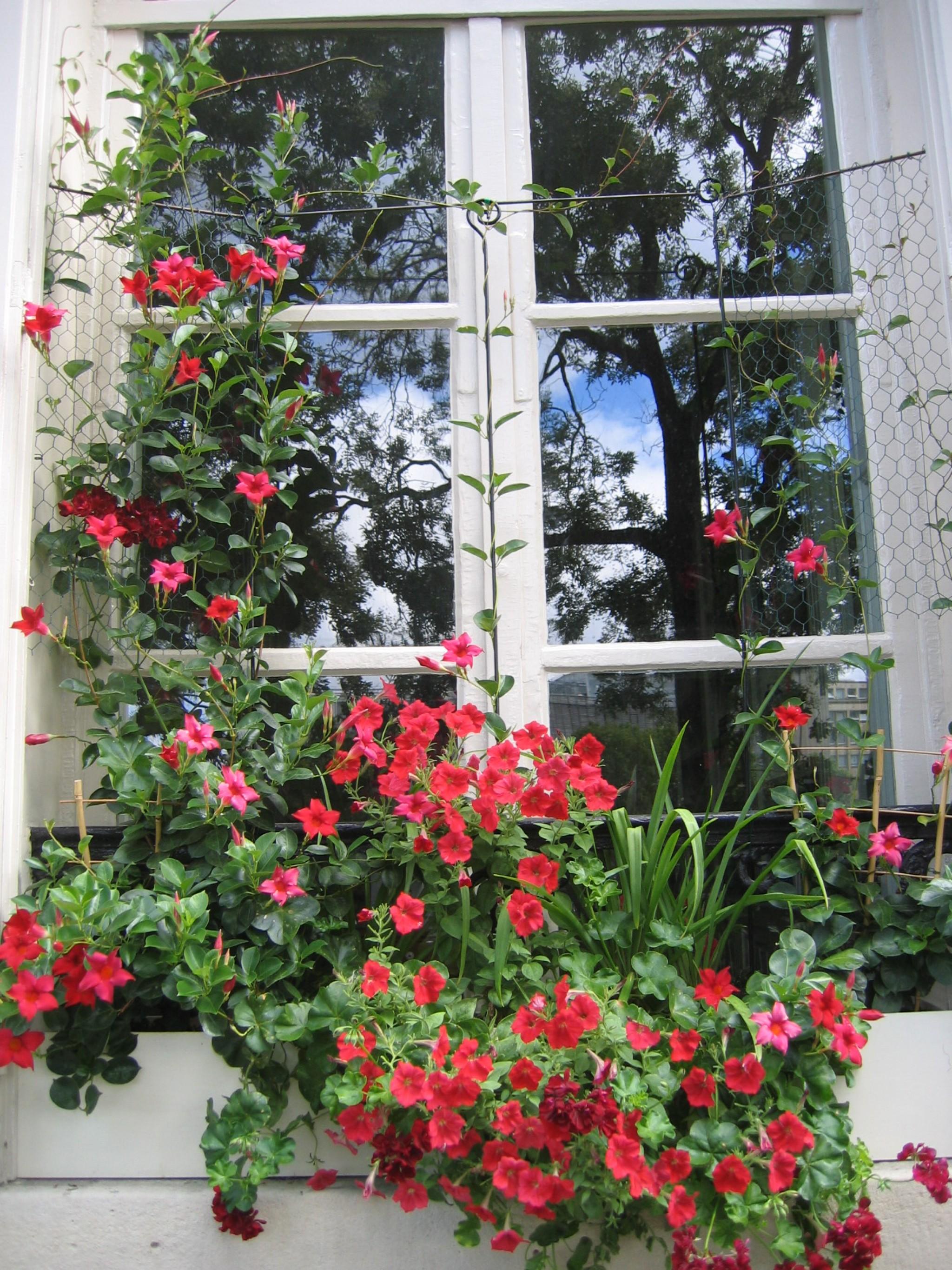 Rampicanti Adatti In Vaso le 10 più belle piante rampicanti per il giardino | fai da